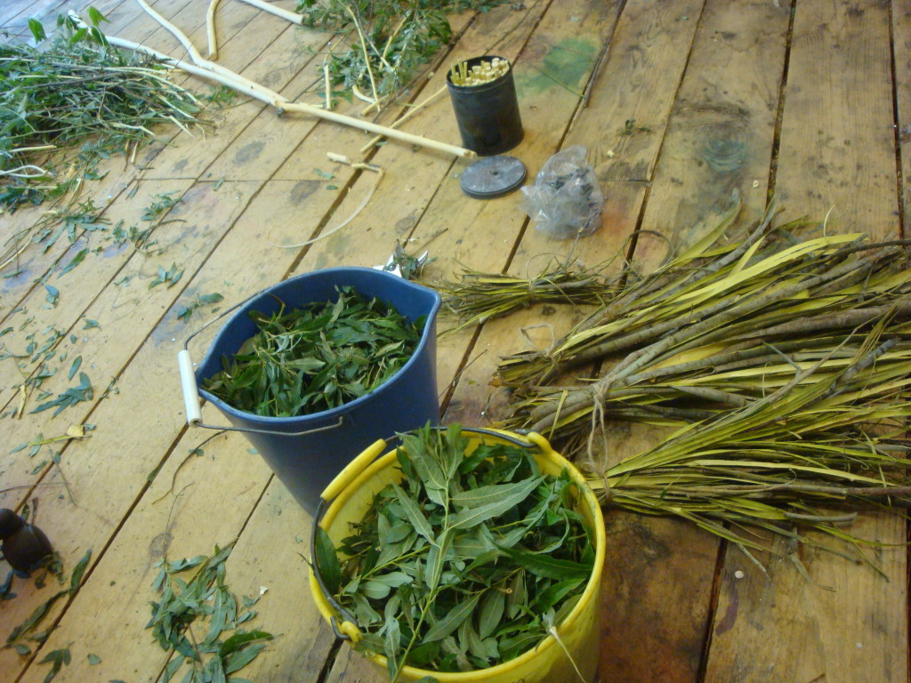 Willow bark, leaves and wood harvested for natural dye and willow charcoal.